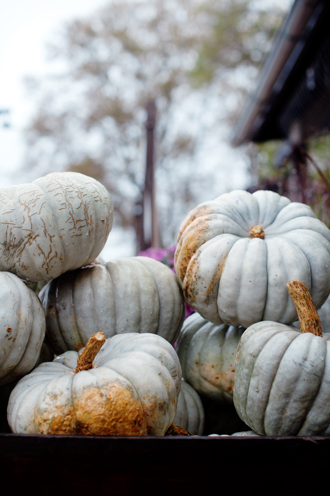 Heirloom pumpkins at Terrain